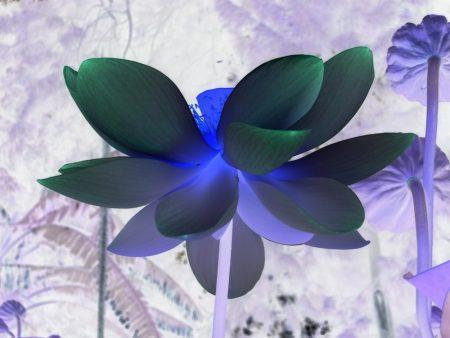 Shiatsu, quantum touch, energie dans le 94 Val-de-Marne à maisons alfort