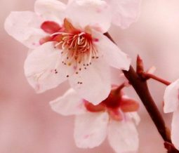Conseillère en élixirs floraux dans le 12 Aveyron à Foissac