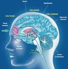 Traumatismes - Addictions - TCC - Thérapie de Couple - Gestion du stress, anxiété - Phobies dans le 03 Allier à Montlucon